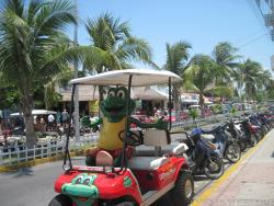 Isla Mujeres Official Store Multibrand frog mascot in a golf cart.jpg