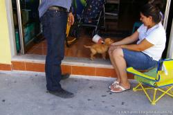 Small puppy in Isla Mujeres.jpg