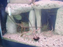 Crustaceans at the Isla Mujeres turtle farm aquarium.jpg