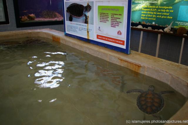 how to build an indoor turtle pond