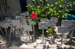 Many turtle eggs with markers buried in the sand at the Isla Mujeres turtle farm.jpg