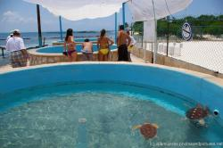 Round outdoor turtle ponds at the Isla Mujeres turtle farm.jpg