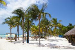 Palm trees and beds and beach chairs of Playa Norte Isla Mujeres.jpg